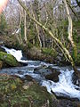 Upper rapids of Afon Fachwen - geograph.org.uk - 320244.jpg