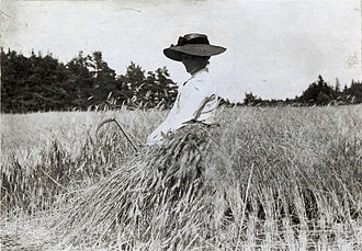 Harvest - Rye harvest on Gotland, Sweden, 1900–1910.