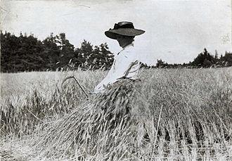 Harvest - Rye harvest on Gotland, Sweden, 1900–1910.