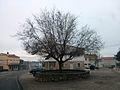 Valdepeñas de la Sierra-Plaza del Olmo.jpg