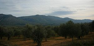 Serra de la Vall d'àngel - View of the central section of the Serra de la Valldàngel with its highest point, 715 m high Tossal d'en Canes, roughly in the middle of the picture