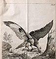 Vermischte Abhandlungen aus der Thiergeschichte (1781) (14749597655).jpg