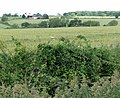 View across Seagrave Wolds - geograph.org.uk - 876943.jpg