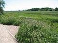 View across marsh pastures - geograph.org.uk - 1335081.jpg