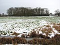 View of Bell's Grove across a snowy marsh pasture - geograph.org.uk - 1659067.jpg