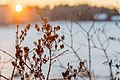 Vinterblomster i Tystberga.jpg
