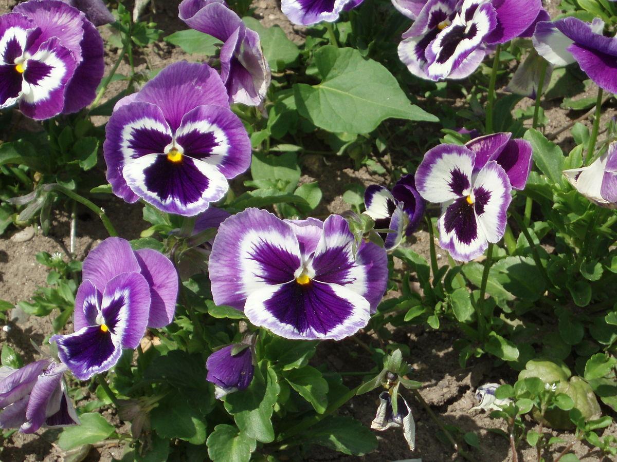 Bloom Clock Keys Global Temperate Late Summer Pink Flowers