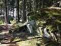 Wald bei Altmelon sl2.jpg