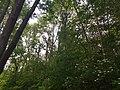 Wald im Wolfstalflur Tauberbischofsheim 05.jpg