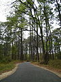 Walking path in Chincoteague National Wildlife Refuge - Virginia - A - Stierch.jpg