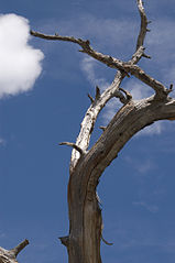 Weathered tree.jpg