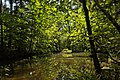 Weiher, Landschaftsschutzgebiet Nagoldtal, Kennung 2.35.037, 04.jpg