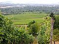 Weinberge bei Fellbach - panoramio.jpg