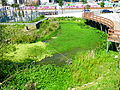 Wetland beside Taipei Extreme Sport Training Center 20110226.jpg