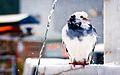 White Bird in Kuşadası.jpg