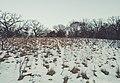 Winter at Blackhawk Park, Eagan, Minnesota (43831272401).jpg