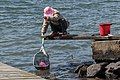 Woman fishing for shore crabs 3.jpg