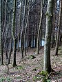 Wood, Edgelaw Reservoir - geograph.org.uk - 711131.jpg