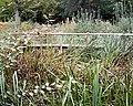 Woodland Pond - geograph.org.uk - 569077.jpg