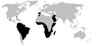 World.distribution.amphisbaenia.1.png