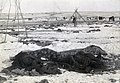 Wounded Knee aftermath5.jpg