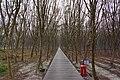 Xizhou Fitzroy Gardens 溪州費茲洛公園 - panoramio (6).jpg