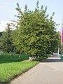 Yakimanka District, Moscow, Russia - panoramio (113).jpg