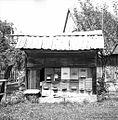 """Čebunak"", Podgora 1962.jpg"