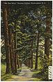 """The Pine Drive,"" Chowan Collage, Murfreesboro, N. C. (5812043502).jpg"