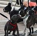 (1)Coogee dogs.jpg