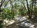 ^66 Pathway to the Lighthouse - panoramio.jpg