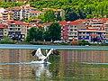 Προσγείωση πελεκάνου στην λίμνη της Καστοριάς.jpg