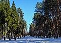 Аллея на кладбище - panoramio.jpg