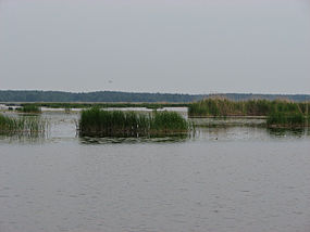 Gulbju ezers vikipedija