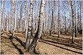 Весна на Южном Урале. - panoramio (7).jpg