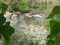 Весняні потоки.jpg