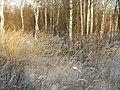 Где-то в России - panoramio (1).jpg