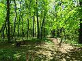 Голосіївський ліс IMG 8460.jpg