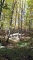 Греків ліс.jpg