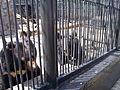 """Зоопарк """"Роев ручей"""" (028).JPG"""