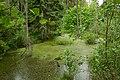 Кургальский полуостров, болото (5).jpg