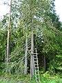 Лес mežs - panoramio (4).jpg
