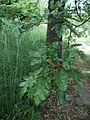 Парк шума Гази Баба во мај (103).JPG