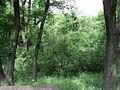 Парк шума Гази Баба во мај (30).JPG