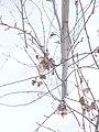 Прошлогодняя листва - panoramio (1).jpg