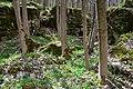 """Скелі в урочищі """"Зіньків камінь"""".jpg"""