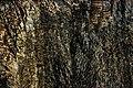 Складчатость и тысяча птиц.jpg