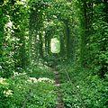 Тоннель любви.jpg