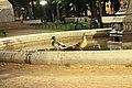 Утки в Румянцевском саду.jpg