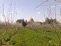 جامع الإيمان مهد الثورة في مدينة القورية.jpg